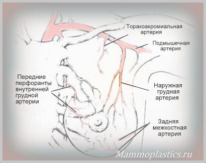 Грудная артерия